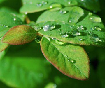 Ecoquent - ökologisch konsequent