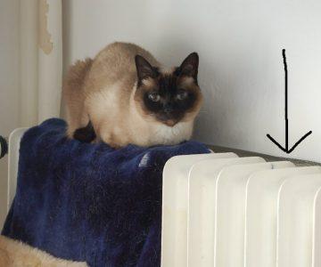 Katze sitzt auf Heizkörper - Kosten sparen