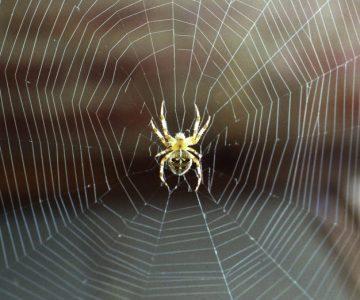 Fernwärme-netz: Wie bei einer Spinne