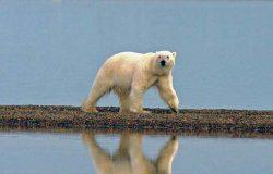 Wie deftig müssen Klima-Wissenschaftler werden, um uns aufzurütteln?