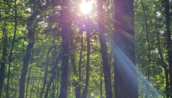 ecoquent_umweltfreundlich_Wald