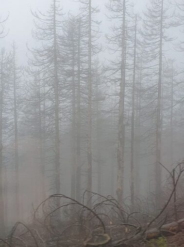 Klimawandel_Waldsterben_Harz