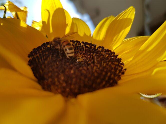 Weltbienentag Bienenheizung