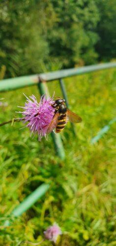 Weltbienentag So heizen Bienen